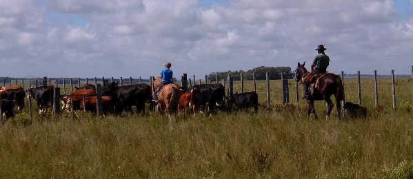 Pampa in Uruguay